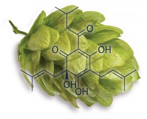 Hops with sample compound overlay